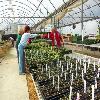 JCC Horticulture greenhouse