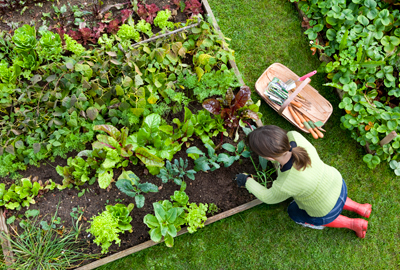 Have a Seasonal Gardening Question?